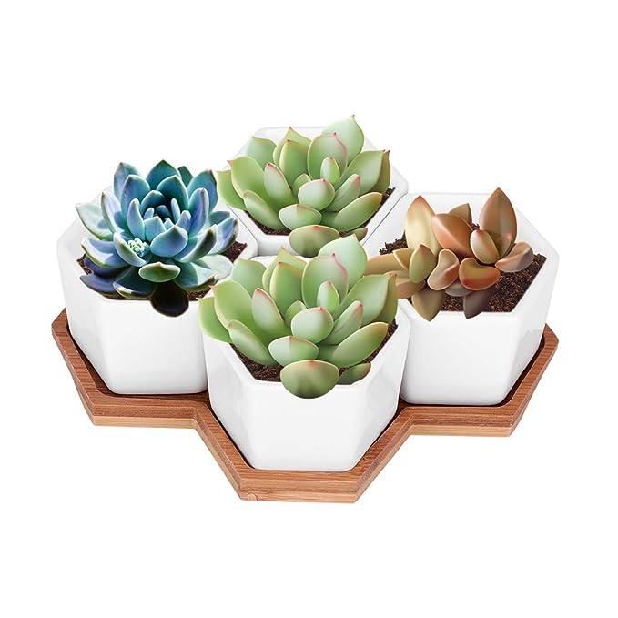 Macetas para cactushttps://amzn.to/2slDzxi