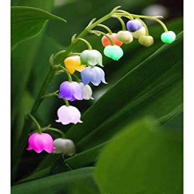 QiBest 100 Pcs Colorful Lily of The Valley Convallaria Majalis Perennial Flower Seeds Flowers : Garden & Outdoor