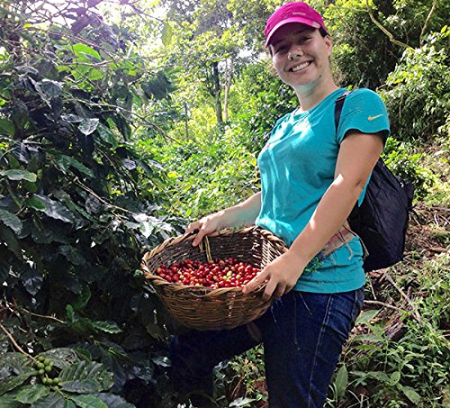 Nicaragua Matagalpa Catimor Arabica, Green Unroasted Coffee Beans (1 lb)