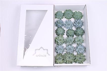 Amazon Com Succulent Echeveria Assorted Aqua Mixed Collection 8cm