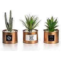 OPPS Mini Plantas Artificiales de plástico Verde Cactus