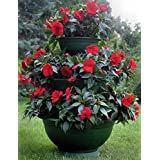 Sana Enterprises Three Tier Plant Stand, Progressively Sized Planters or Flower Pots, Green