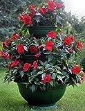 Sana Enterprises Three Tier Plant Stand, Progressively Sized Planters or Flower Pots, Green