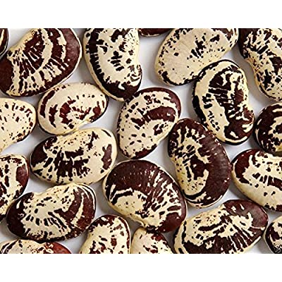 Christmas Lima beans (pole)100 Seeds, Heirloom date to the 1840s, Non-Gmo ! : Garden & Outdoor