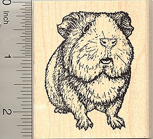 Guinea Pig Rubber Stamp, Realistic Cavy Art
