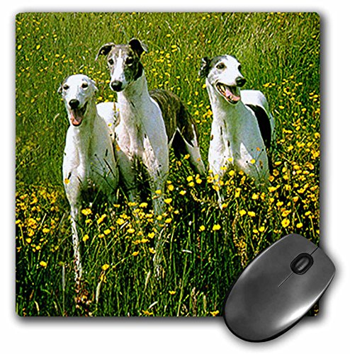 3dRose LLC 8 x 8 x 0.25 Inches Mouse Pad, Greyhound (mp_483_1)