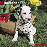 Dalmatian Puppies 2013 Wall Calendar #10204-13