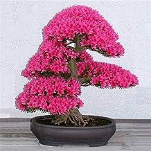 Bonsai Tree japanese sakura seeds ,bonsai flower Cherry Blossoms for home & garden 50g/pack