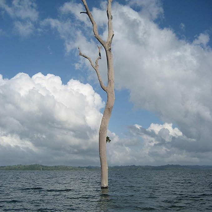 Kanteln: 290 x 80 x 50 mm Bastelholz oder Schnittholz f/ür Profis und Kenner B/&C Home Seltenes Panama-Kanal Unterwasserholz Edelholz Ipe unbehandeltes naturbelassendes Tropenholz als Drechselholz