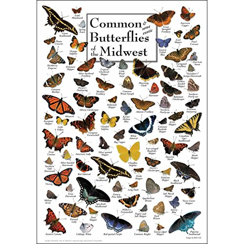 Earth Sky & Water Poster - Common Butterflies of the Midwest -