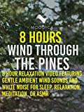8 Hours: Wind Through The Pines: 8 Hour Relaxation Video Featuring Gentle Ambient Wind Sounds and White Noise for Sleep, Relaxation, Meditation, or ASMR