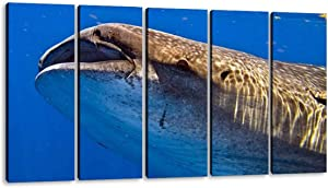 KiiAmy 5 Panels Art Wall Decor Whale Shark at isla Mujeres Whale Shark Stock Pictures, Royalty Free Artwork Modern Canvas Prints Office Bedroom Home Decor Framed Painting Ready to Hang (60''Wx32''H)