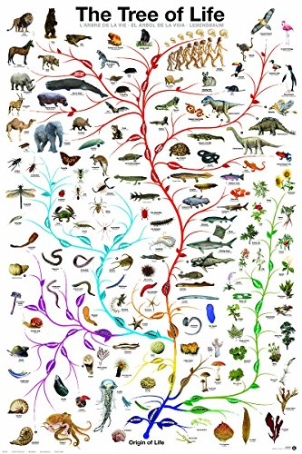 Laminated Evolution Tree of Life featuring Charles Darwin Poster Print 24x36