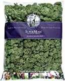 SuperMoss (23084) Reindeer Moss Preserved Bag, 32 oz, Basil