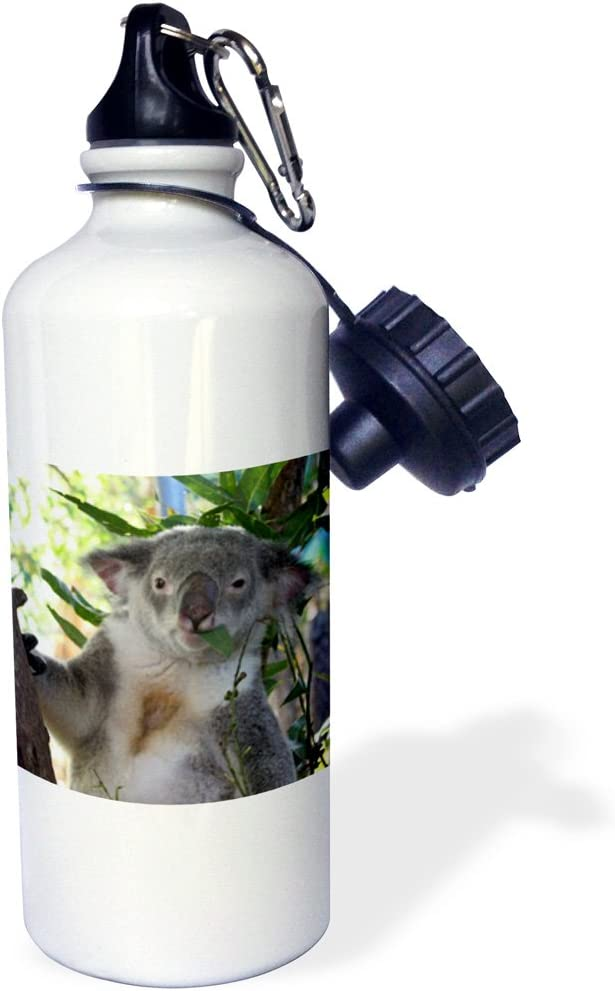 Albom Design Animals - Cute Koala eating Eucalyptus Queensland Australia - Water Bottles