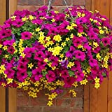 Creative Farmer Petunia Mixed Flower Seeds