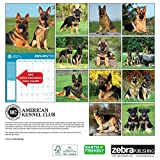 American Kennel Club German Shepherds 2018 Wall Calendar