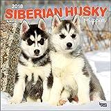 Siberian Husky Puppies Calendar 2018 - Deluxe Wall Calendar (12x12) Siberian Husky Calendar 2018