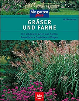 Die Schönsten Gräser Für Den Garten gräser und farne die schönsten arten und sorten auswählen