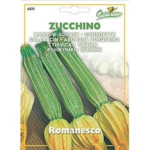 Hortus 56ZUC6431 Maxi Busta Ortovivo Zucchino Romanesco, 12x0.2x16.5 cm 5 spesavip