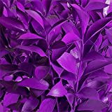 Ruscus Painted Pastel Purple - 120 Stems
