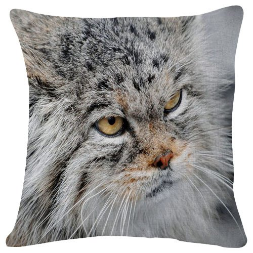Fluffy Pallas's cat Animal - #47028 - Plush Cushion Covers Throw Pillowcases Super Soft Fashion Simple Decorative Pillowcases 18x18 Inches
