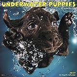 Underwater Puppies 2017 Wall Calendar
