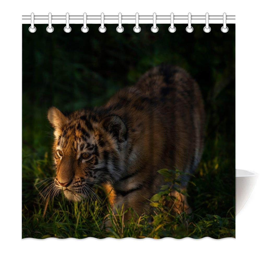 HommomH 69 x 84 Inch Tiger Cub Shower Curtain Fabric Bathroom Decor Set with Hooks Looking for Food in The Forest by HommomH