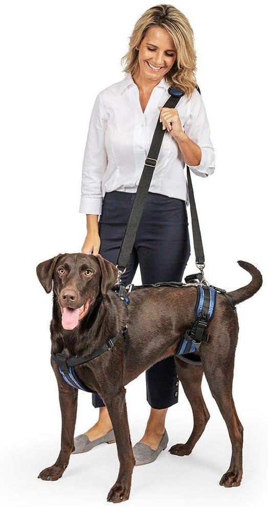 arneses para perros con displasia de cadera
