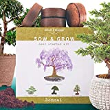 Nature's Blossom Bonsai Tree Seed Starter Kit - Grow 4 Bonsais From Seeds