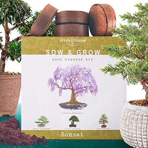 Nature's Blossom Bonsai Tree Kit. Grow 4 Types of Miniature Trees From Seed. A Complete Indoor Gardening Seed Starter Set with Organic Tree Seeds, Soil, Planting Pots, Plant Labels and Growing Guide (Best Christmas Tree To Plant)