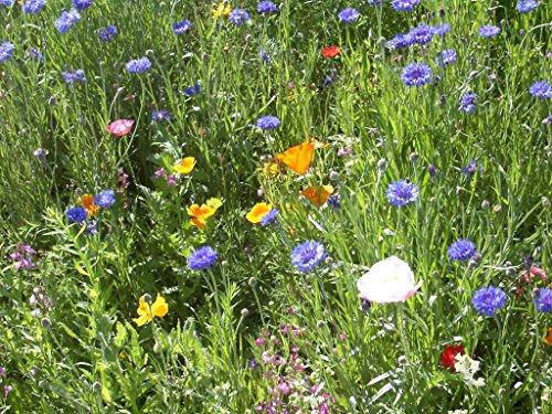 Rocky Mountain Wildflower Blend (2000 sq ft)