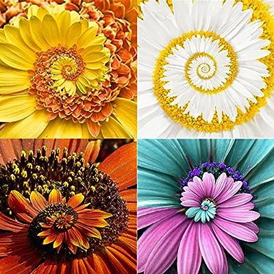 100Pcs//Bag Rare Purple Sunflower Seeds Beautiful Flower Home Garden OrnameER