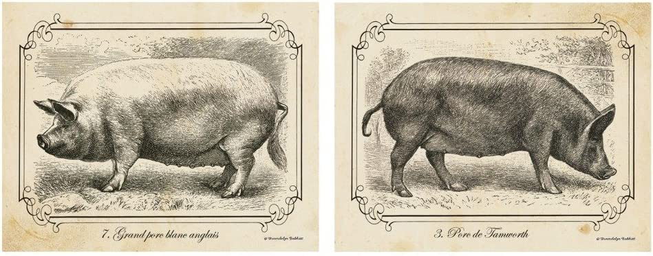 wallsthatspeak 2 Black and White Pig Drawings Grayscale Vintage Pigs Farm Animals Home Kitchen Decor Art Print Posters 11x14 Inches Great for Framing!
