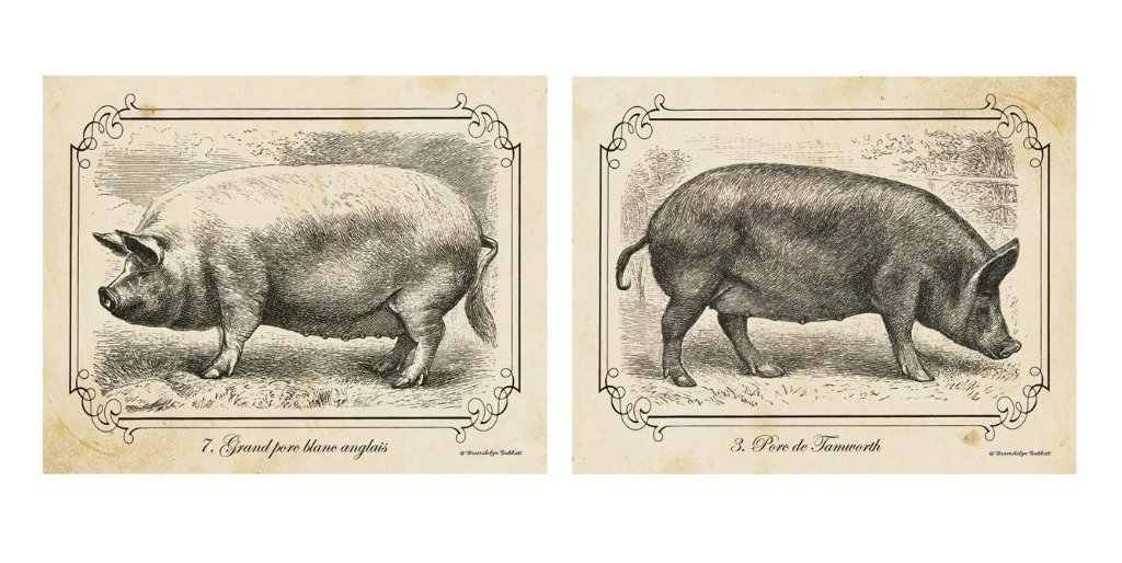 Amazon 2 Black And White Pig Drawings Grayscale Vintage Pigs Farm Animals Home Kitchen Decor Art Print Posters 11x14 Inches Great For Framing