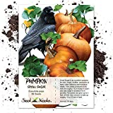 Package of 50 Seeds, Small Sugar Pumpkin (Cucurbita pepo) Non-GMO Seeds by Seed Needs
