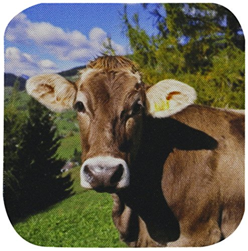 cst_82188_1 Italy, Dolomite Alps, Swiss Brown Cow-Eu16 Re...