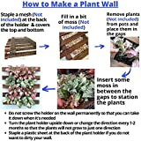 ShopLaLa Wall Planter – Hanging Planter for