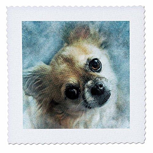 3dRose Sven Herkenrath Animal - Dog Portrait - 18x18 inch quilt square (qs_280293_7) by 3dRose