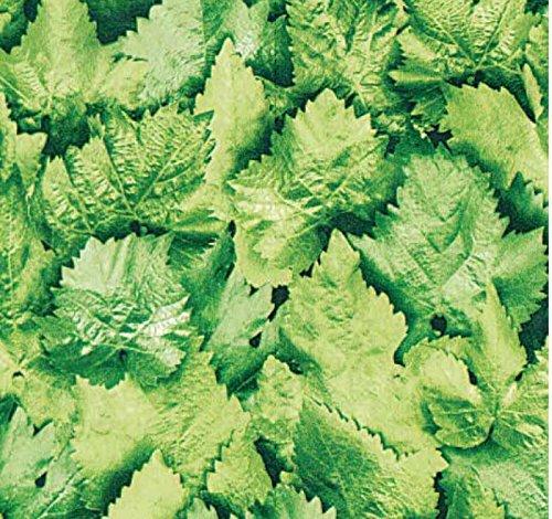 Klebefolie Möbelfolie Dekorfolie Blätter grün 45 cm x 200 cm selbstklebend