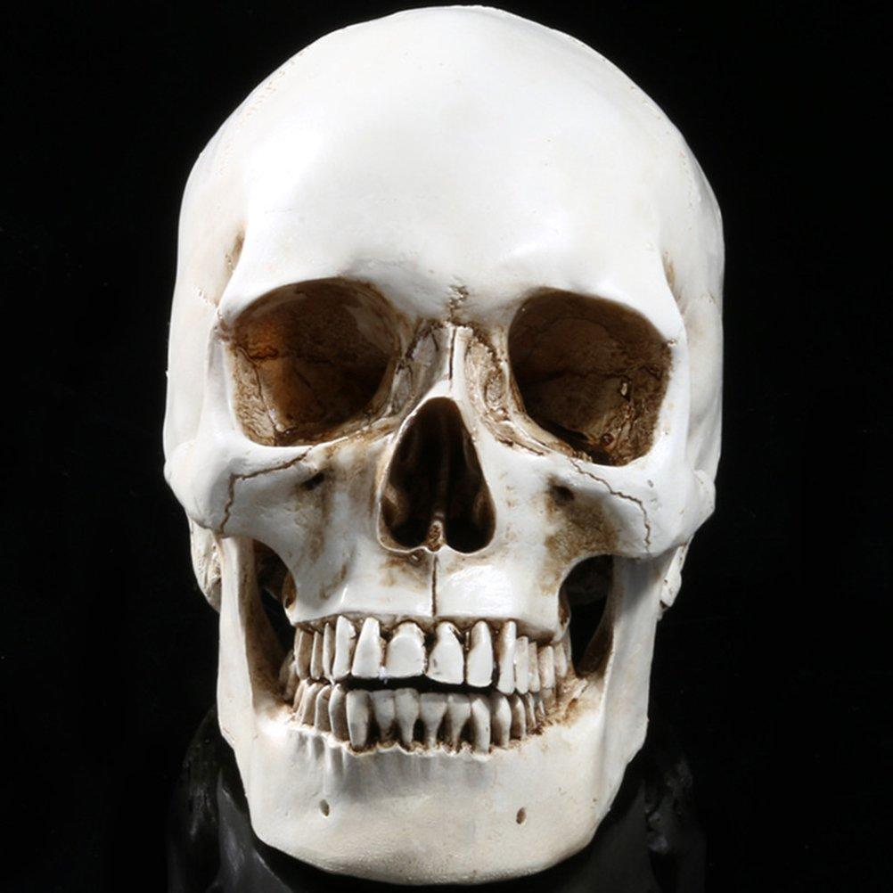 LUOEM Lifesize Human Skull Skeleton Model Replica Resin Medical Anatomical Tracing Medical Teaching Skeleton Halloween Decoration Statue