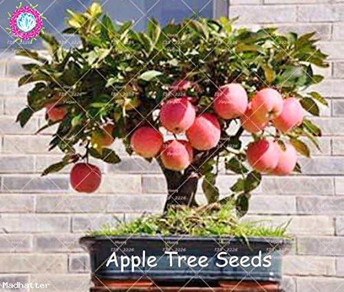 30pcs Semillas enanos miniatura semillas de árboles de fruta dulce orgánica Vegetable Seeds Planta de interior o exterior para jardín: Amazon.es: Jardín