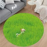 Nalahome Modern Flannel Microfiber Non-Slip Machine Washable Round Area Rug-ful Chihuahua Puppy Dog in the Grass Cute Animal Pet Best Friend Picture Fern Green Cream area rugs Home Decor-Round 63''