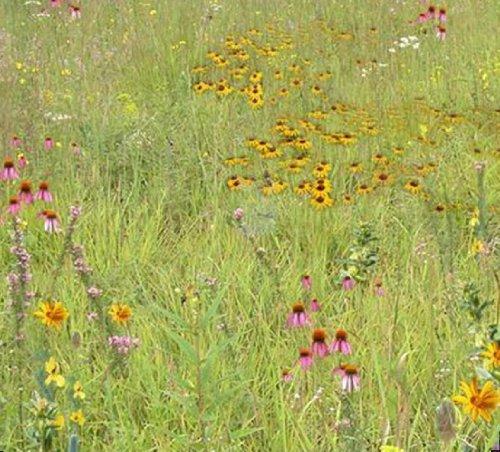 quail-habitat-mix-mix-139-1-pls-pound-true-native-seed