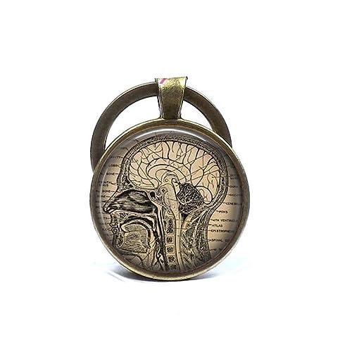 Amazon.com: Cerebro anatómico Keychain, cerebro humano ...