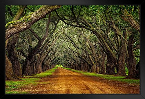 Oaks on Plantation Road Photo Art Print Framed Poster 18x12 by ProFrames