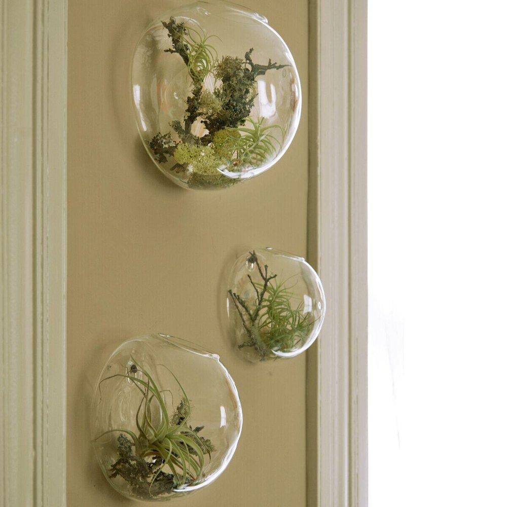 Amazon Com Set Of 3 Wall Bubble Terrariums Indoor Plants Holders