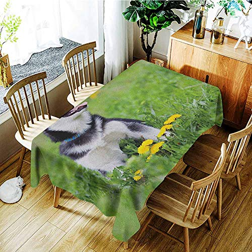 GUUVOR Alaskan Malamute Elastic Edges fit The Rectangular Tablecloth Little Puppy Playing on Green Grass Spring Meadow Natural Life Outdoors Suitable for Most Home Decor W52 x L70 Inch Multicolor