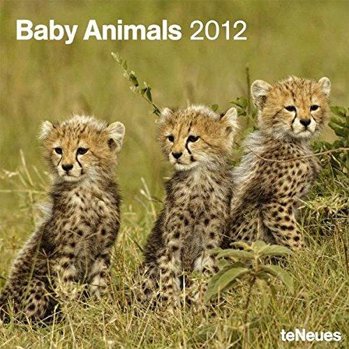 Baby Animals 2012