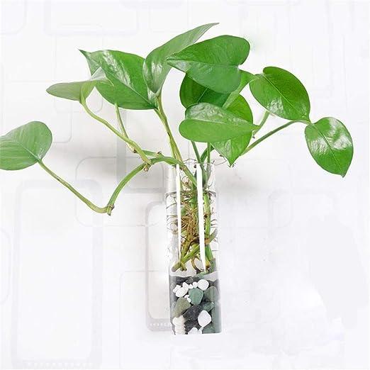 Plantas hidropónicas Botellas de Vidrio Trigg Colgante Maceta y ...